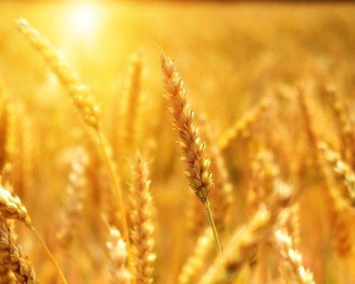 L'été est la période de la lumière, de la chaleur, des récoltes et du passage à l'action