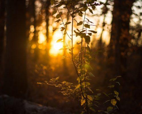 Tisser des liens avec la nature: immersion en forêt